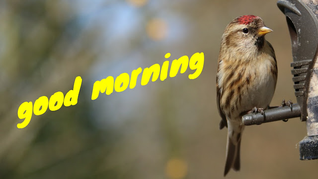 good morning image BIRD HD