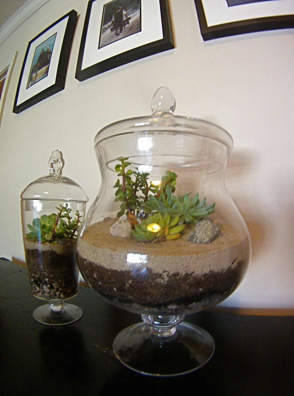 Renew Refresh Feather Your Nest Terrific Terrariums An