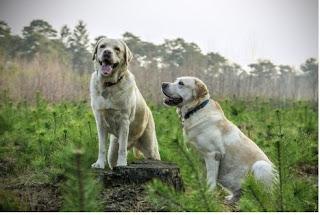 تفسير حلم الكلب لكبار علماء التفسير