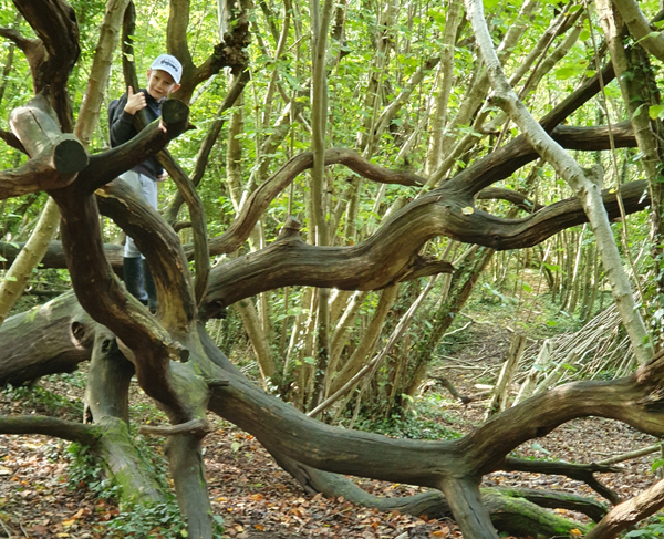 Climbing weird and wonderful trees