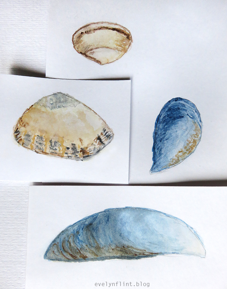 SEA SHELL SKETCHES