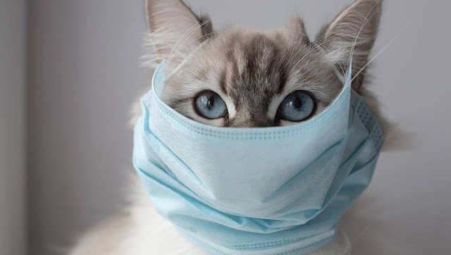 Yes, cats get coronavirus. But it's not the same as the one that causes COVID-19