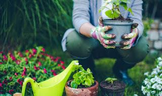 Ide-Ide Berkebun Organik Top Notch Untuk Meningkatkan Tanaman Anda!