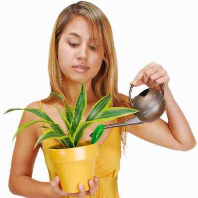 Innovative Gadgets That Lets You Know Your Plants Are Thirsty (13) 1