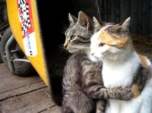 pet shop  Nomes Para Gatos Com a Letra H