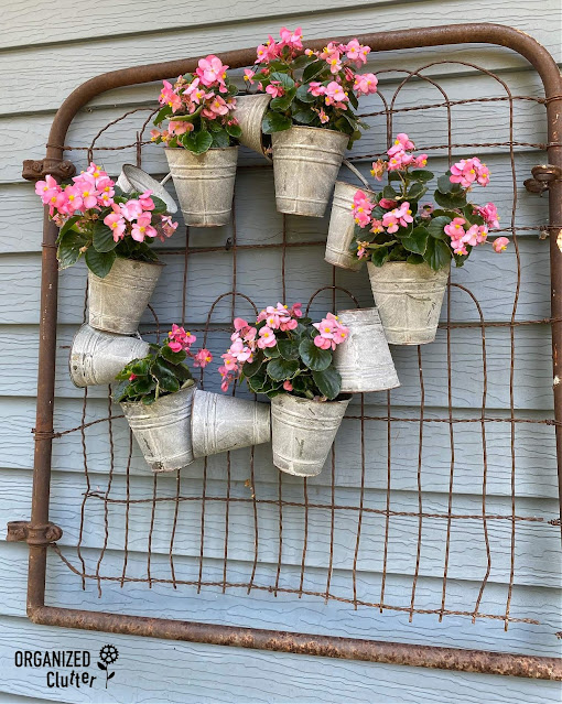 Photo of a galvanized wreath planted with begonias on a rusty gate.