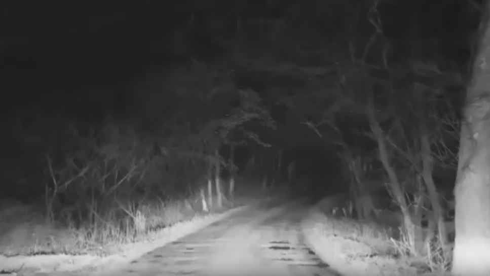 Bigfoot Evidence: Bigfoot Seen On Dark Country Road In ...
