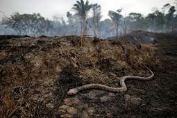 A Bíblia está certa? Recém-descobertos fósseis mostram cobras tinham pernas
