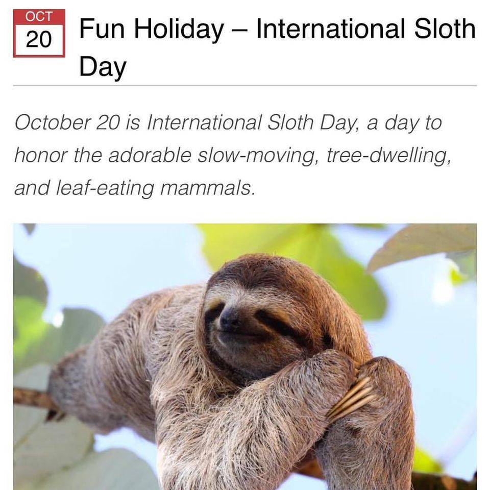 International Sloth Day Wishes For Facebook