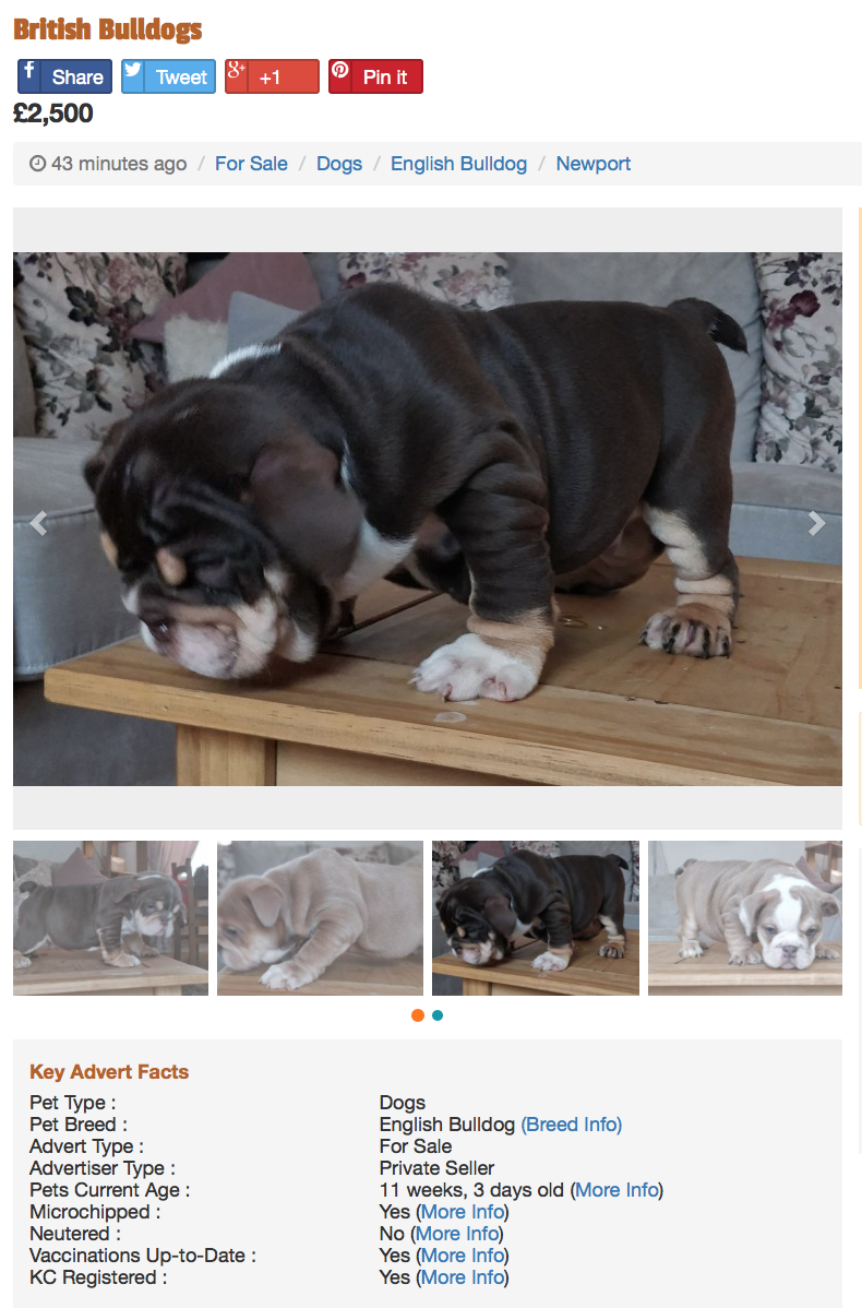 Pedigree Dogs Exposed The Blog Warning Dont Buy Into