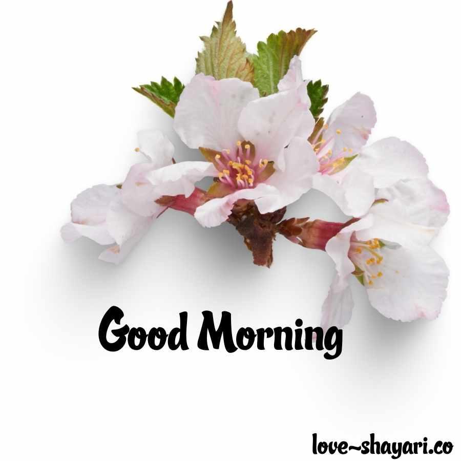 goodmorning flower images