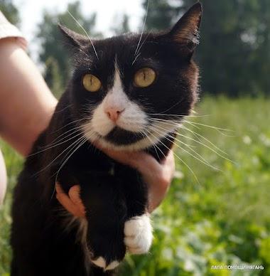 Даша - Скромненькая чёрно-белая кошечка