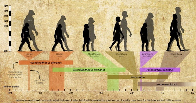 The species of Lucy was polygynous, new footprints show