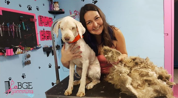 Dog Groomer Opened Her Shop In Middle Of The Night To Give A Stray Dog A Haircut