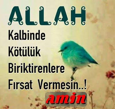 Allah, kalbinde kötülük biriktirenlere fırsat vermesin. (Amin), dua, günün duası, serçe, dalda serçe, kuş, kötülük, iyilik, sinsilik