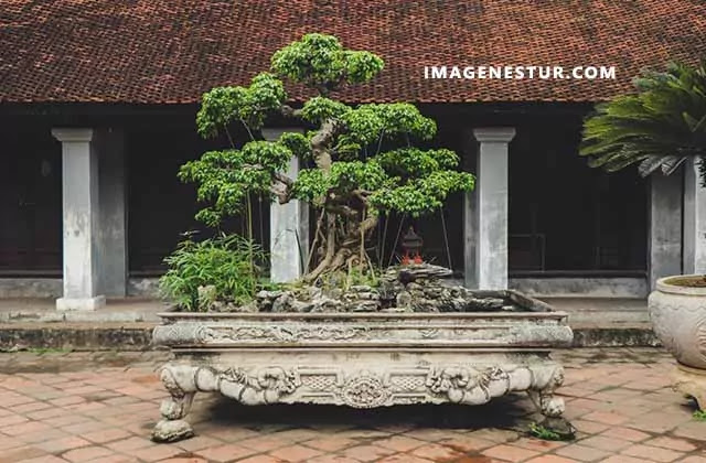 Here are some of the best bonsai tree captions for Instagram bio you can use these Japanese bonsai tree quotes and slogans to share your pictures.