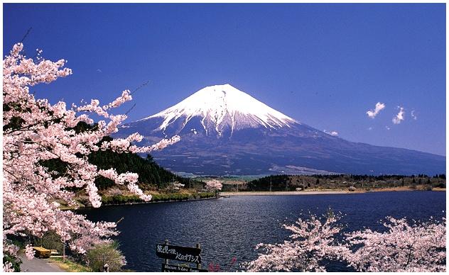 14 Pilihan Paket Tour Halal  Wisata Jepang yang Seru bersama Cheria Travel