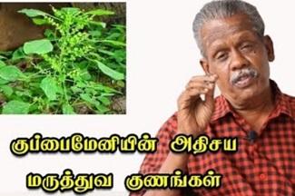 Kuppaimeni Leaves and Plant Uses and Benefits