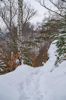 Winterwandern in Bad Harzburg | Kleiner und Großer Burgberg und Besinnungsweg | Baumschwebebahn | Wandern im Harz 19