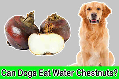 can dogs eat water chestnuts, can dogs have water chestnuts, water chestnuts dogs