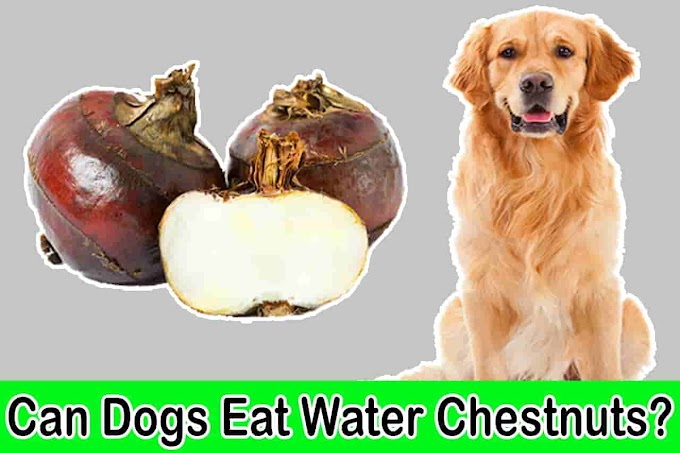 [2021] Can Dogs Eat Water Chestnuts | Are Water Chestnuts Bad for Dogs