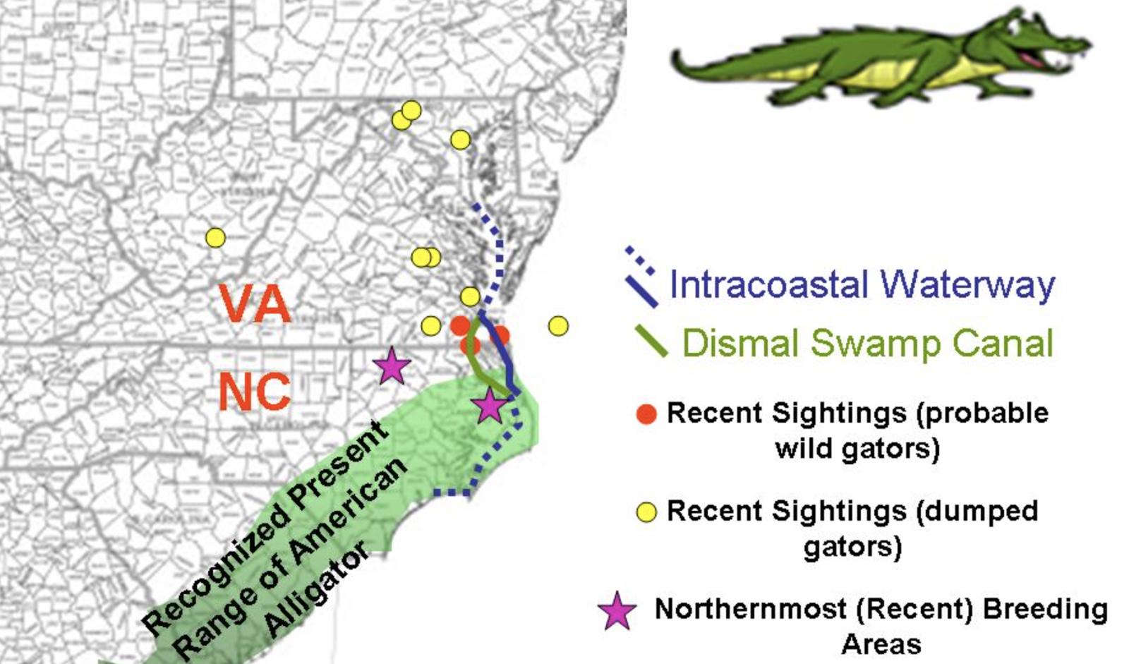 Alligators In Lake Norman? | Nancy LiPetri On Lake Norman