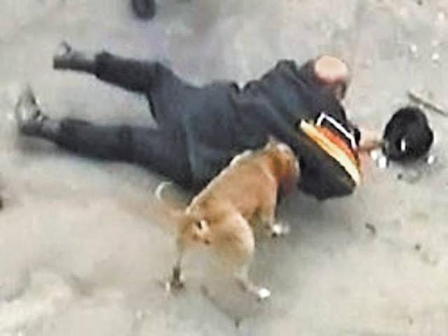 Стая бродячих собак спасла жительницу Калуги от изнасилования!
