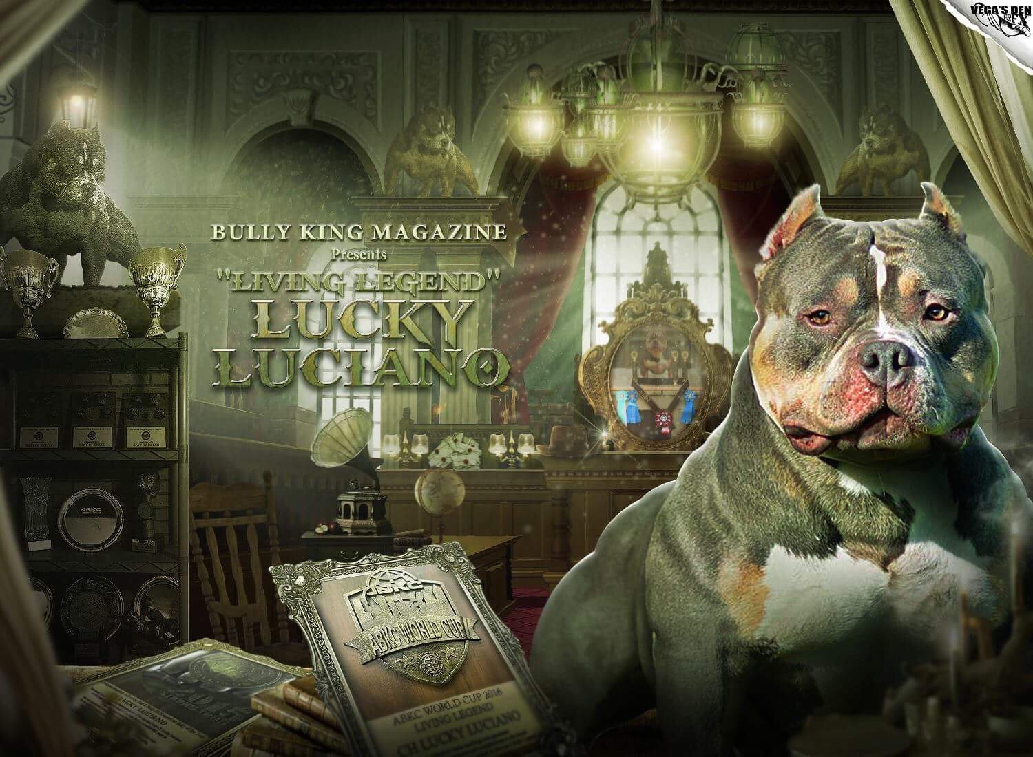 The Story of Champion Lucky Luciano | American Bully Legend | BULLY