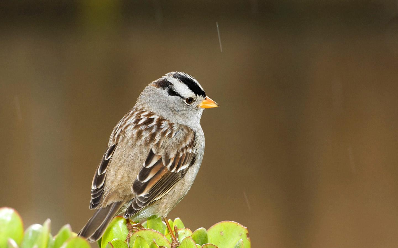 Звук пение птиц скачать.