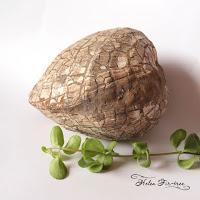 collection of stones and fossils коллекция камней и окаменелостей