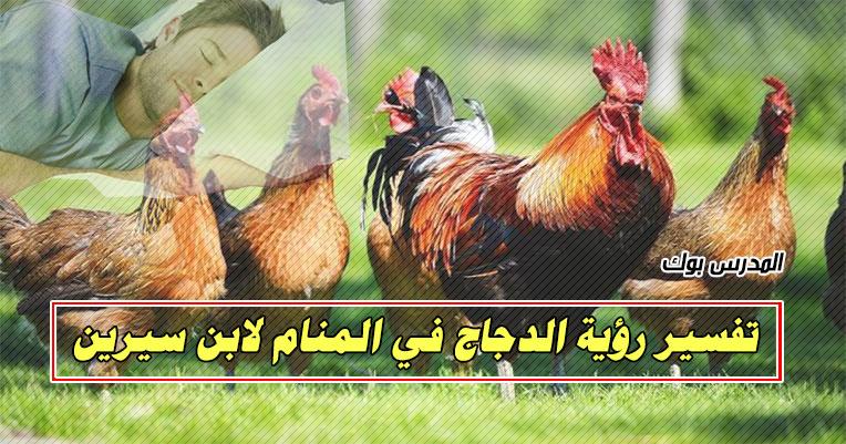 تفسير حلم الدجاج في المنام للعزباء والمتزوجة والحامل والرجل لابن سيرين والنابلسي