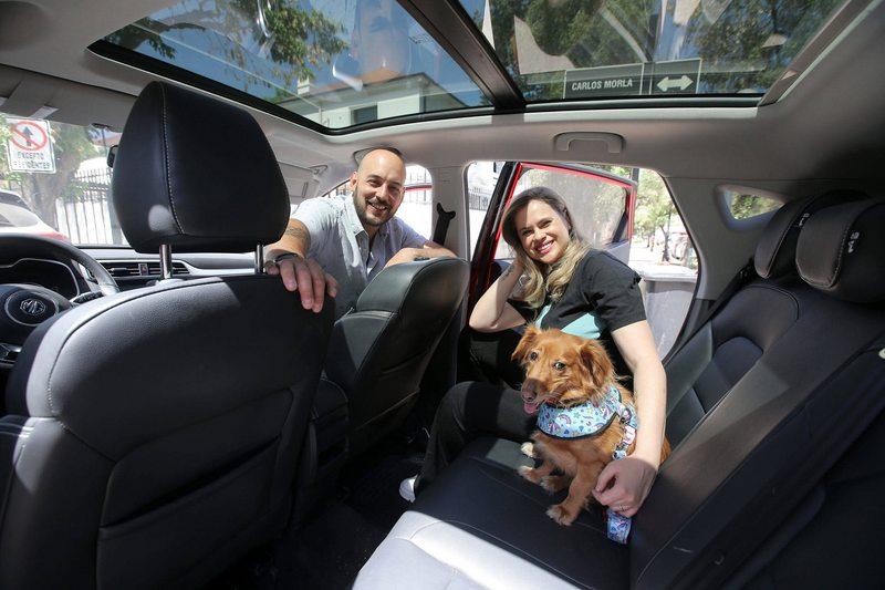 Eliana Albasetti y Federico Koch viajan con un kit especial en el auto para rescatar animales
