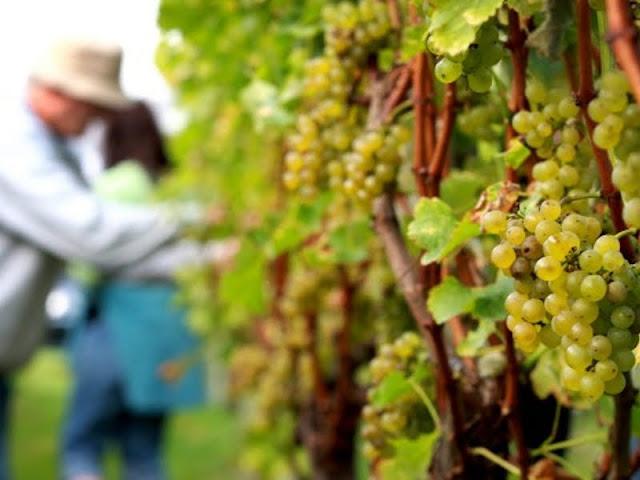 Sektor Pertanian Dorong Pertumbuhan Ekonomi Selandia Baru