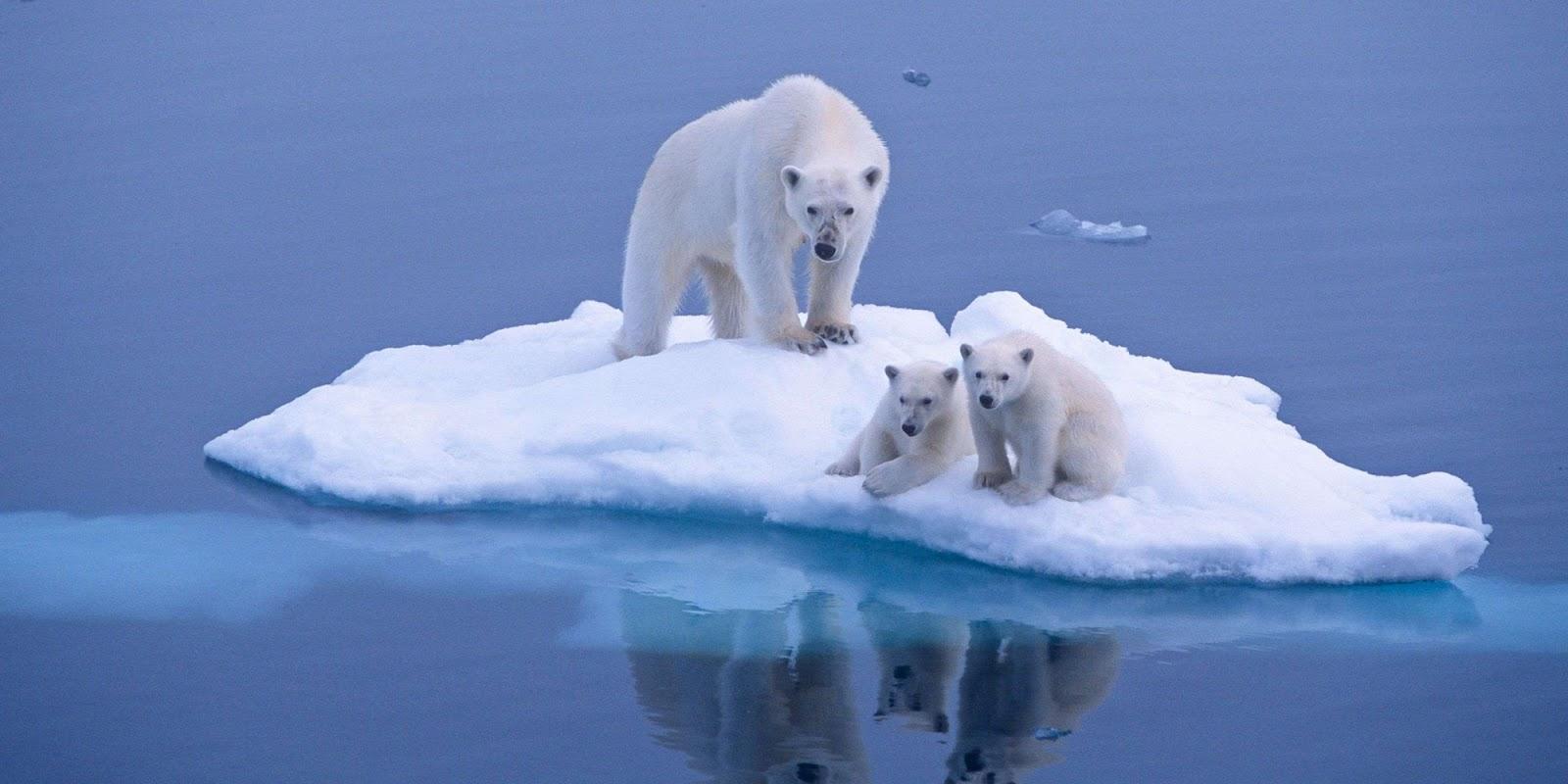 conte pour enfants la famille ours est menac e par le r chauffement climatique. Black Bedroom Furniture Sets. Home Design Ideas