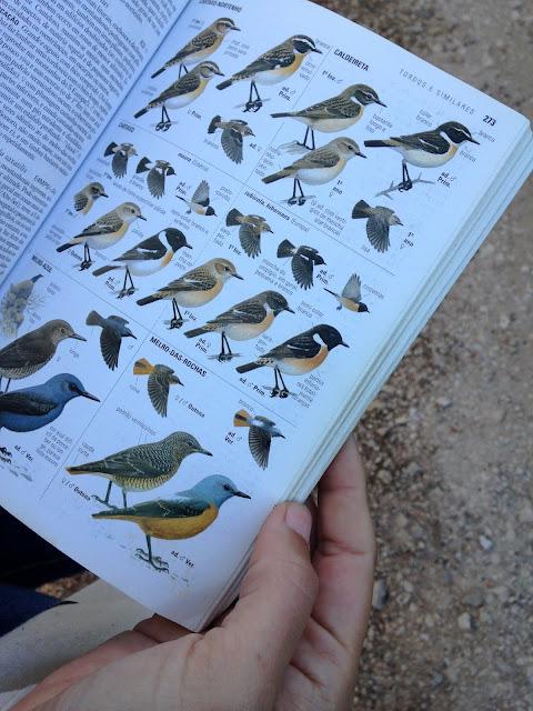 livro sobre aves em Portugal