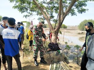 Tanam 300 Pohon Mangrove Babinsa dan SMA Walisongo Peduli Lingkungan