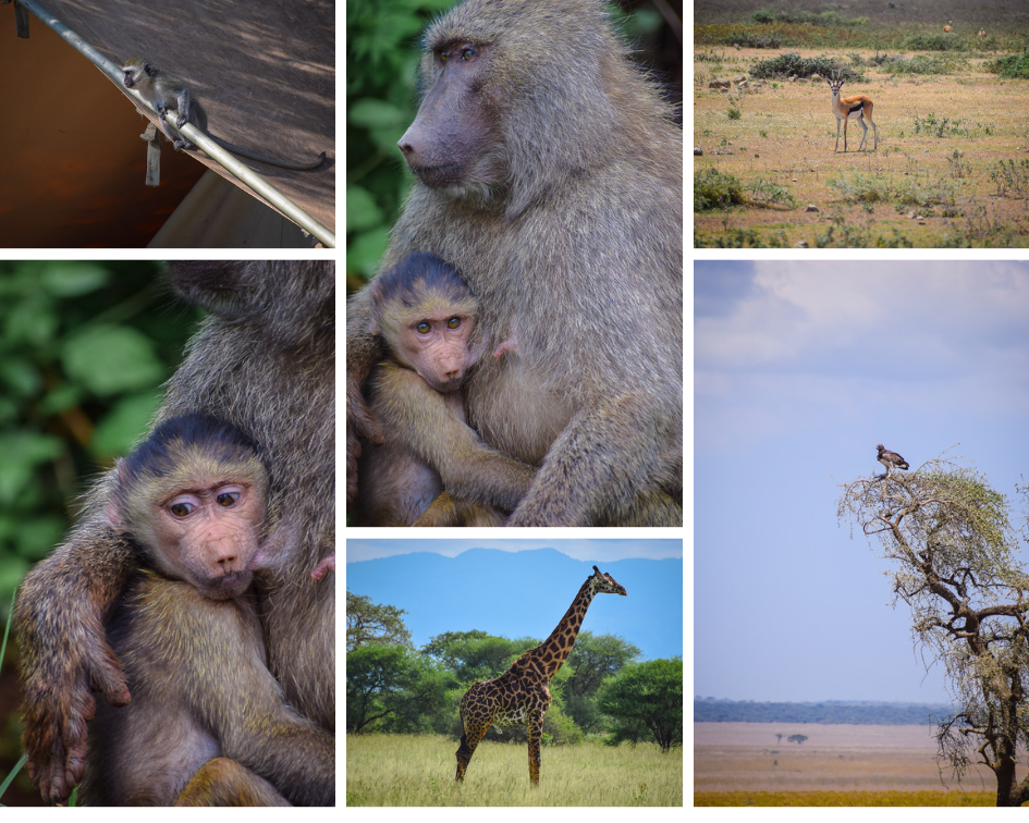 Serengeti National Park Review