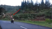 Ujung-ujungnya Nyungsep, Viral Video Pria Unjuk Kebolehan Diatas Motor