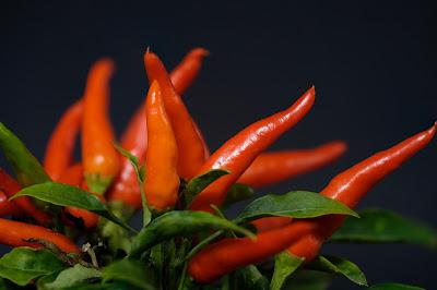 लम्बी उम्र के लिए लाल मिर्च जरूर खाएँ - लाल मिर्च खाने के फायदे और नुकसान