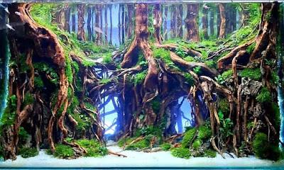 Aquascape Tema Hutan Keren
