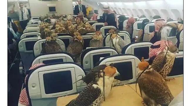 Foto 80 Ekor Burung Helang Naik Kapal Terbang Buat Pengguna Internet Terperanjat
