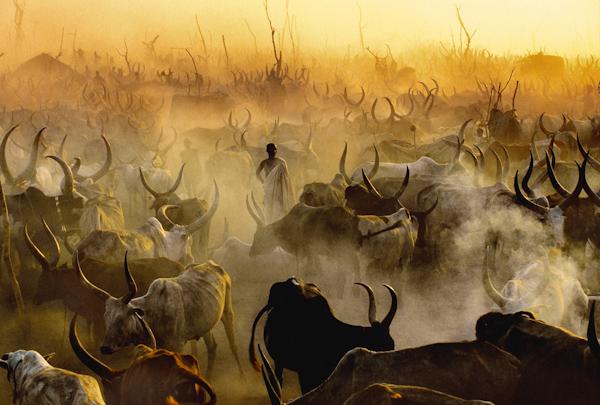 Dinka: Seri Foto Kehidupan Afrika Oleh Carol Beckwith & Angela Fisher