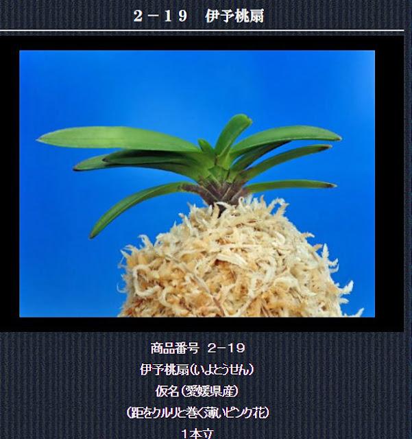 http://www.fuuran.jp/2-19html