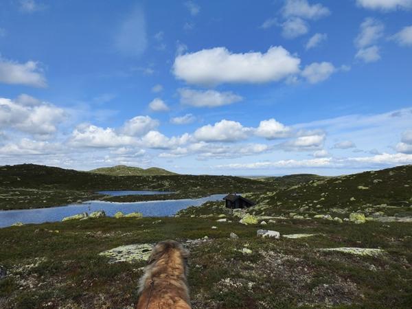 Sørbølfjellet harehopp leonberger