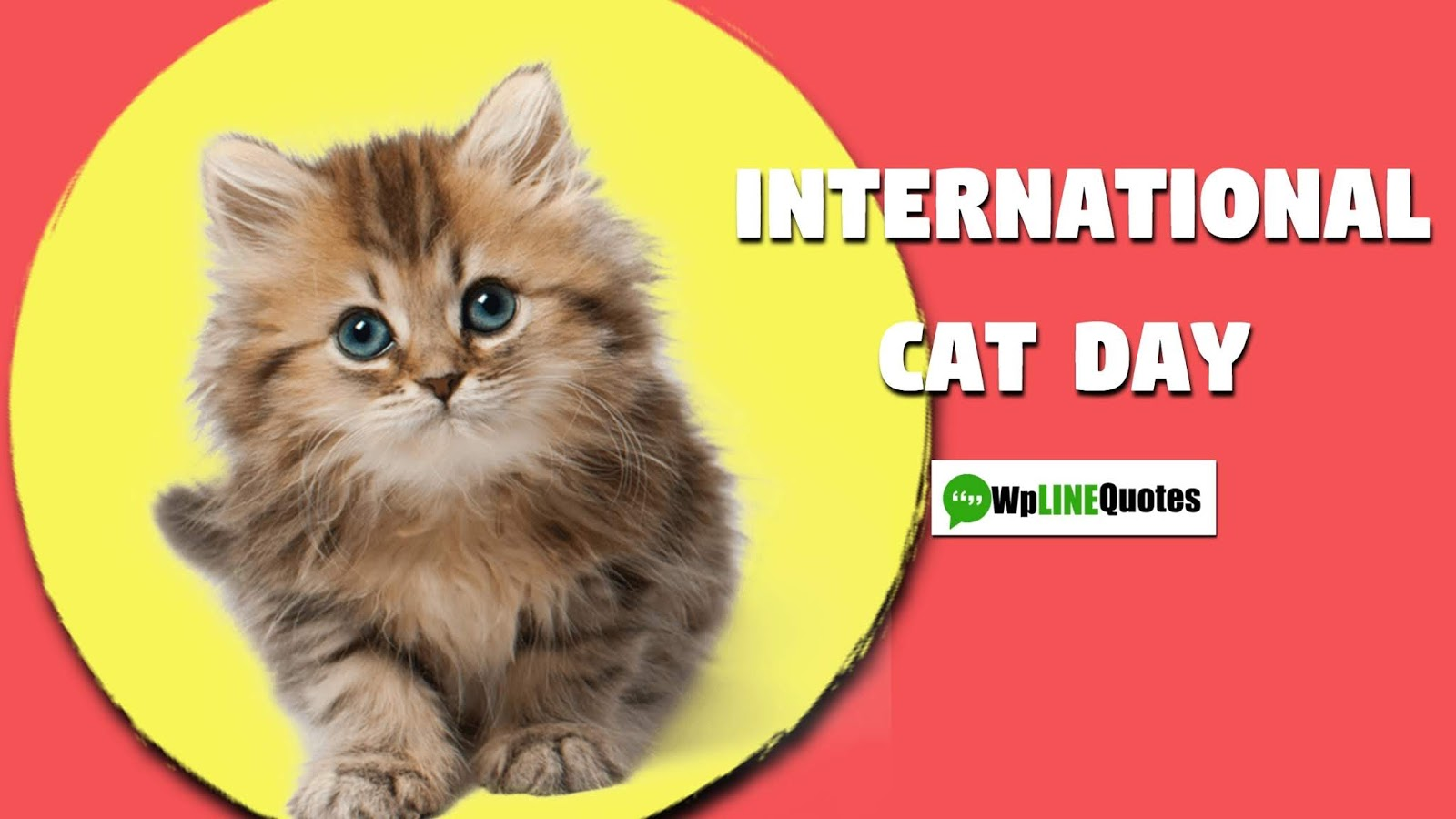 (New) International Cat Day 2019 Quotes, Status, Wishes