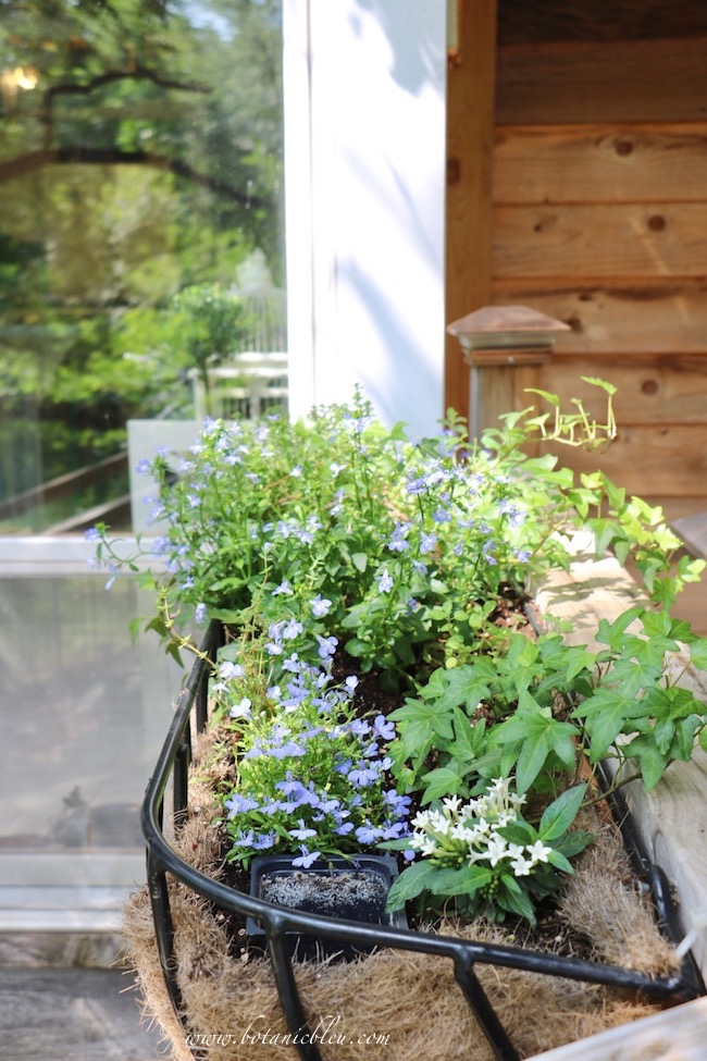 Spring Porch Window Box Basket has herbs, ivy, and blooming plants