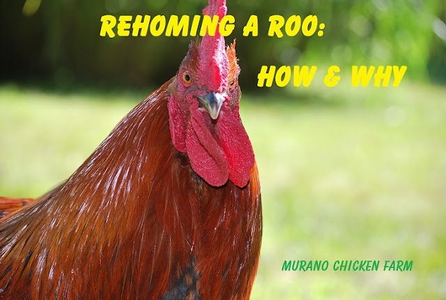 re-homing a roo