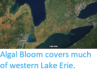https://sciencythoughts.blogspot.com/2017/10/algal-bloom-covers-much-of-western-lake.html