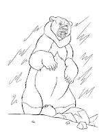 דפי צביעה דובי קוטב