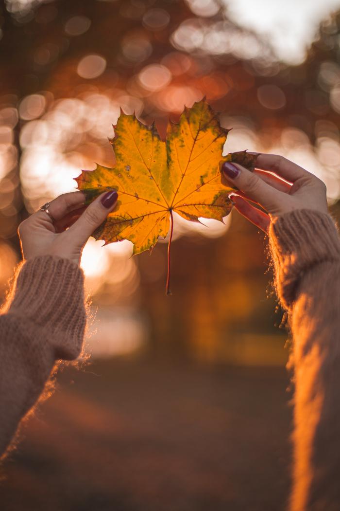 liście i ręce